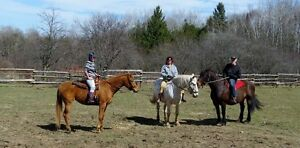 Trade Employment/Work Time for Horse Riding Time at Stable !