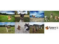 Dog Walking, Training and Pet Care Services