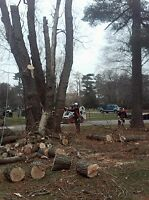 Insured Tree Removal Bridgewater and Surrounding Areas