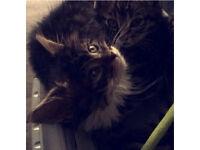 Tabby Kitten & Accessories!!