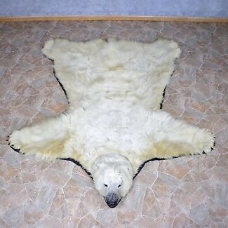 Polar Bear taxidermy - Collectible RUG