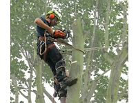 Tree cutting /tree dismantling service