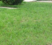 Lawn Cutting - Fall Clean ups  , Fertilizer  , Aeration