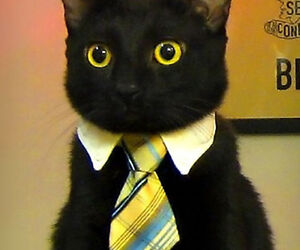 Business Tie for smaller animals