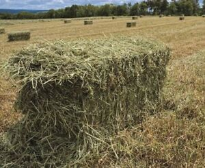 Bails of Hay for Sale