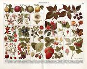 Antique Prints Lithographs
