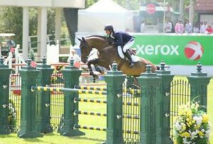 Grand Prix Show Jumping Horses Wanted