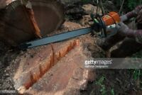 Skilled arborist for hire in hrm don 902-830-9544