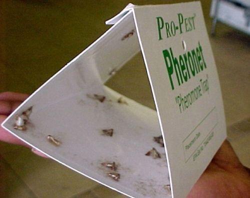 1 X Pantry Moth Traps - Set of Two