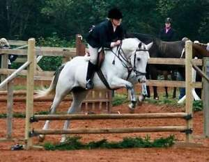 Offering riding lessons or assistance in training