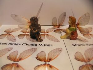 OOAK Fairy cicada wings transparency sheet 12 pairs
