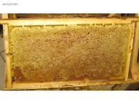 Honey with comb from Black Sea