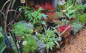 100's of PLANTS for SALE Huntfield Heights Morphett Vale Area Preview