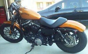 Harley Sportster in Mint Condition