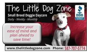 The little Dog Zone - Pet sitter or Doggy Day Care - No GST