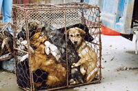 ** Petition to Ban Dog and Cat Fur Products in Canada **