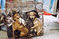 ** Petition to Ban Dog and Cat Fur Products in Canada ** Watch|S