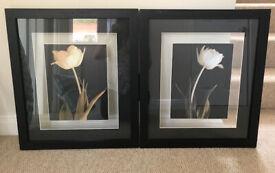 Flower prints with glass background FOC - damaged frames