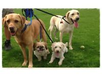 Dog walker/pet sitting service, licensed, DBS checked and fully insured North Cardiff