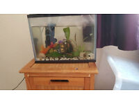 Fish tank with 2 fish - Perfect starter tank!