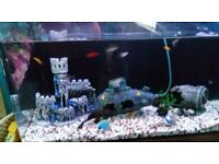 Tropical fish tank with pump heater fish