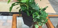 Artificial potted plant new condition