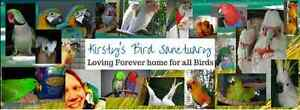 We take in ALL unwanted Birds & Parrots Minden Somerset Area Preview