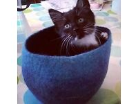 Mad cat lodger needed for large friendly home central Exmouth