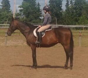 Horse for Sale/Rehome