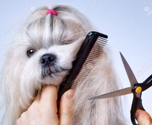 Will take your dog to your groomer or vet apt.
