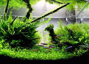 Aquarium group for peterborough ontario on facebook