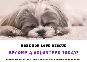 BECOME A VOLUNTEER FOR OUR RESCUE TODAY!