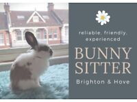 Rabbit sitting - experienced, friendly & reliable