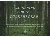 Gardening for yew