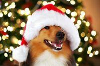 Christmas Dog Grooming