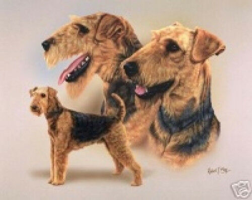 Robert J. May Multi Study - Airedale Terrier