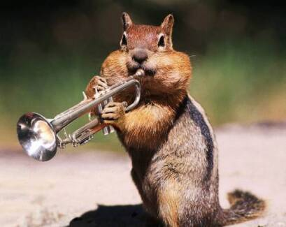 Wanted: Wanted: trumpeter and/or accordionist