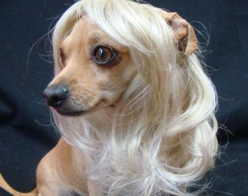 Dog Costumes colorfull synthetic hair pet wig lovely pet dog wigs Blonde TP51
