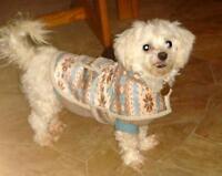 "Adult Female Dog - Maltese: ""Olivia"""