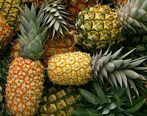 Organic Dried Pineapple Rings — NonGMO, Unsulfured, Unsweetened, Kosher, Bulk