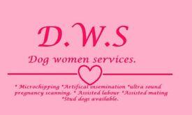Ultrasound pregnancy dog scan, Microchipping, Artificial insemination