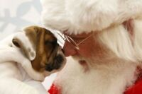 Penny Sale, Craft Sale, Bake Sale and More. Santa Paws