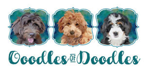 Ooodles of Doodles!