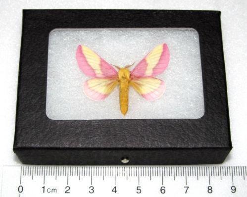 framed insects ebay
