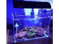 Saltwater nano tank