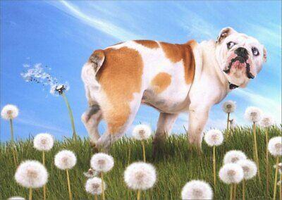 Bulldog With Dandelion Funny Birthday Card - Greeting Card by Avanti Press