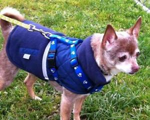 """Senior Female Dog - Chihuahua: """"Blanch and Rose"""""""