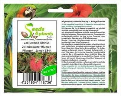 100x Callistemon Citrinus Limpiador de Cilindros Flores y Plantas - Semillas