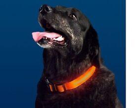 Light Up Pet Collar