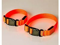 Light Up Pet Collar